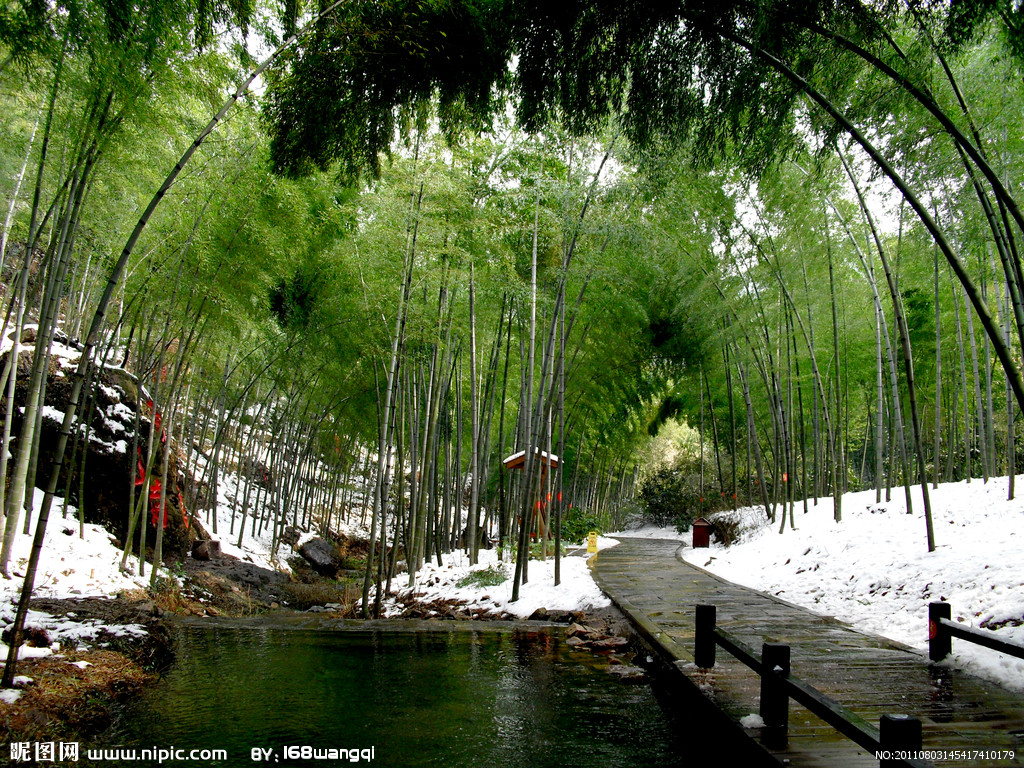 人少景色又美的滨水竹林,门票才20块!真心想度假就去这些地方吧图片