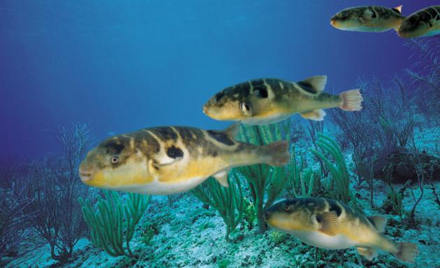 壁纸 动物 海底 海底世界 海洋馆 水族馆 鱼 鱼类 630_384