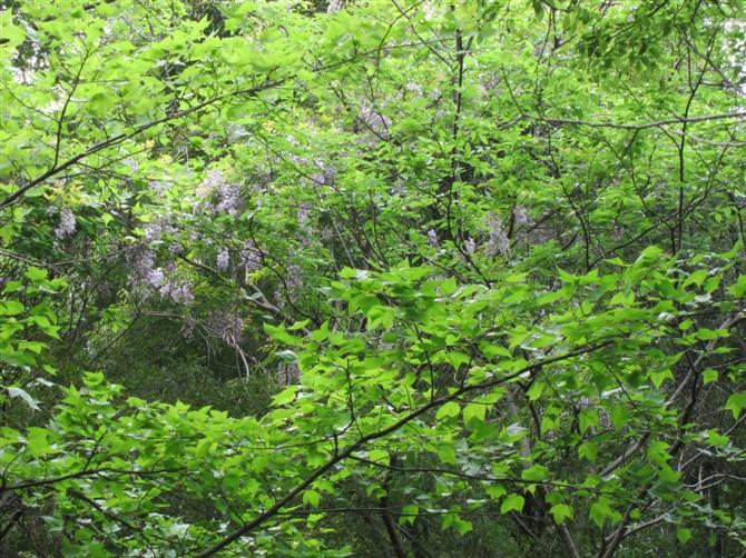 它笑傲丛林,花开树梢之上,我只能仰望